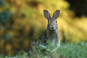 Like this rabbit in the grass, parents are often very nervous about parent teacher conferences.
